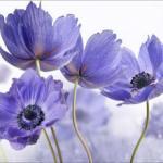 Фиолетовые цветы 2992