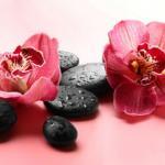 Орхидеи 0320