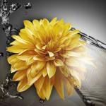 Желтые цветы № 3298