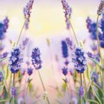 Фиолетовые цветы 3678