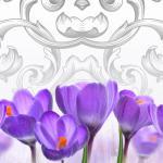 Фиолетовые цветы 5441