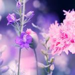 Фиолетовые цветы 5656
