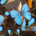 Сине-голубые цветы № 6475