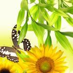 Желтые цветы № 7561