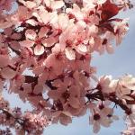 Цветы и фрукты холст 10