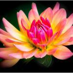 Цветы и фрукты холст 8