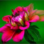 Цветы и фрукты холст 9